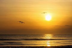 Silent Atlantic Sunrise. Birds flying over ocean at a morning Florida beach Royalty Free Stock Photography