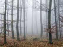 Silent autumn wood. Wood with fog on a early autumn morning Stock Photo