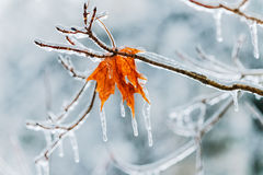Silent choice in winter. A single leaf on an icy day in winter Royalty Free Stock Images