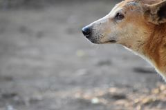Silent. Dog look Stock Photo