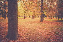 A silent fall Royalty Free Stock Images