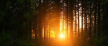 Free Silent Forest In Spring With Beautiful Bright Sun Rays Royalty Free Stock Image - 91810486