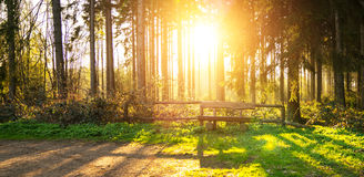 Silent Forest in spring with beautiful bright sun rays. Bench in Silent Forest in spring with beautiful bright sun rays - wanderlust Stock Photos