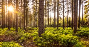 Silent Forest in spring with beautiful bright sun rays. Wanderlust Stock Images