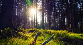 Silent Forest in spring with beautiful bright sun rays. Wanderlust Royalty Free Stock Photography