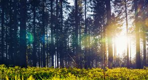 Silent Forest in spring with beautiful bright sun rays. Wanderlust Royalty Free Stock Image