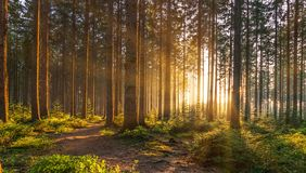 Silent Forest in spring with beautiful bright sun rays stock image