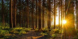 Silent Forest in spring with beautiful bright sun rays royalty free stock images