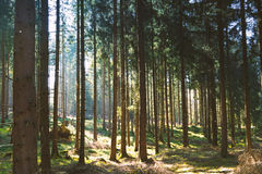 Silent Forest in spring with beautiful bright sun rays. Wanderlust Stock Photos