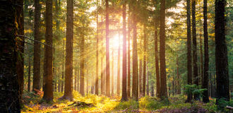 Silent Forest in spring with beautiful bright sun rays. Wanderlust Royalty Free Stock Images