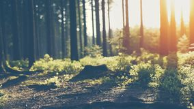 Silent Forest in spring with beautiful bright sun rays. Wanderlust stock video footage
