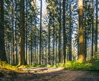 Silent Forest in spring with beautiful bright sun rays. Wanderlust Royalty Free Stock Photos