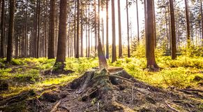 Silent Forest in spring with beautiful bright sun rays. Wanderlust Stock Photography