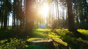 Silent Forest in spring with beautiful bright sun rays. Wanderlust Stock Image