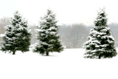 Silent Moments. Winter scene with pine trees covered in new snow Royalty Free Stock Photography