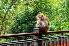 Lonely monkey  after rain Royalty Free Stock Photos