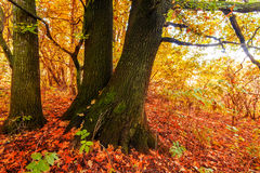 Silent mysterious autumn forest Stock Photo