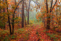 Silent mysterious autumn forest Stock Images