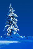 Silent night. Snow covered evergreen on a moonlit silent night Stock Photo