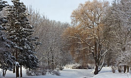 Silent park covered with snow Royalty Free Stock Photo