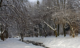 Silent park covered with snow Royalty Free Stock Image