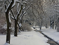 Silent park covered with snow Royalty Free Stock Photos