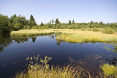 Silent pond in the marsh royalty free stock photos