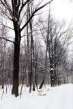 Silent snow-covered urban park Royalty Free Stock Photography