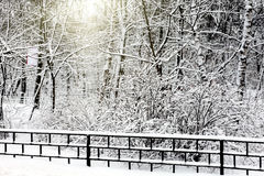 Silent snow-covered urban park Royalty Free Stock Photos
