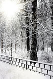 Silent snow-covered urban park in winter Stock Photos