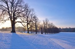 Silent sunshine on the snow stock photography