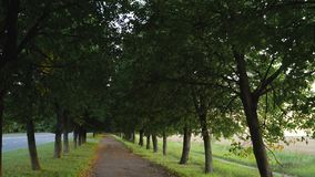 Silent walkway with trees for walking stock footage