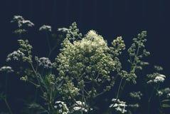 Silenzio dei fiori di estate di stile Immagini Stock