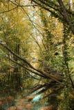 Silenzio della foresta Fotografie Stock Libere da Diritti