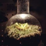 Sileshår i konisk flaska Royaltyfria Bilder