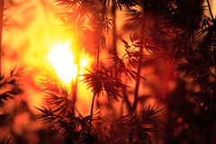 silhoette φυτών Στοκ φωτογραφία με δικαίωμα ελεύθερης χρήσης