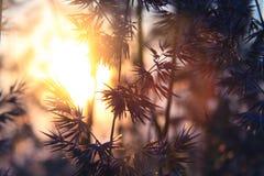 silhoette φυτών Στοκ εικόνες με δικαίωμα ελεύθερης χρήσης