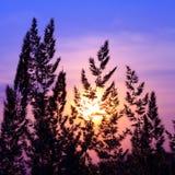 silhoette φυτών Στοκ φωτογραφίες με δικαίωμα ελεύθερης χρήσης
