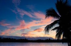 Silhoette da árvore de coco Foto de Stock Royalty Free