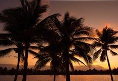 Silhoette da árvore de coco Imagem de Stock Royalty Free