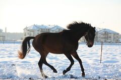 Silhoette of horse galloping free Royalty Free Stock Images