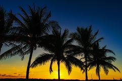 Silhoette of palm trees welcoming the sunset under the navy blue sky