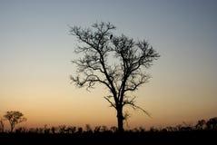 silhoette sunrize Стоковые Фото