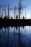 Silhouet反射在池塘,黄石国家公园 库存图片