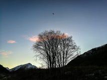 Silhouet деревьев с ярким голубым небом Стоковые Фотографии RF
