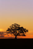 Silhouet 2 van de Boom van de zonsondergang Royalty-vrije Stock Fotografie
