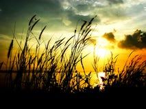 Silhouet bij dageraad Royalty-vrije Stock Afbeeldingen