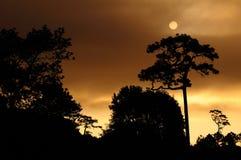 Silhouet bij zonsondergang Stock Afbeeldingen