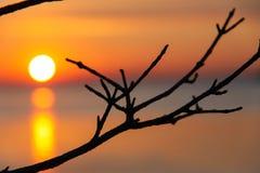 Silhouet bij zonsondergang. Stock Afbeeldingen