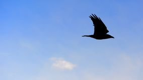 Silhouet Bird on blue sky Royalty Free Stock Photo